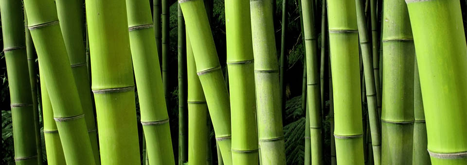 Bamboo, Natural Supplements, Dr. Sears, My Pure Radiance, All Natural Beauty